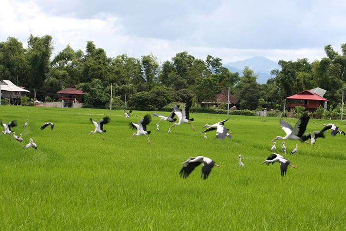 Đất lành chim đậu